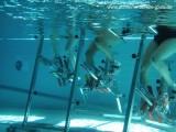 """Aqua-Cycling """"Wieder fit"""""""
